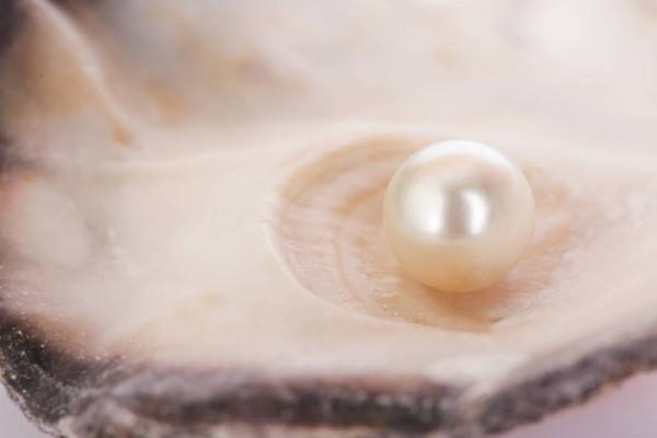 Perlă